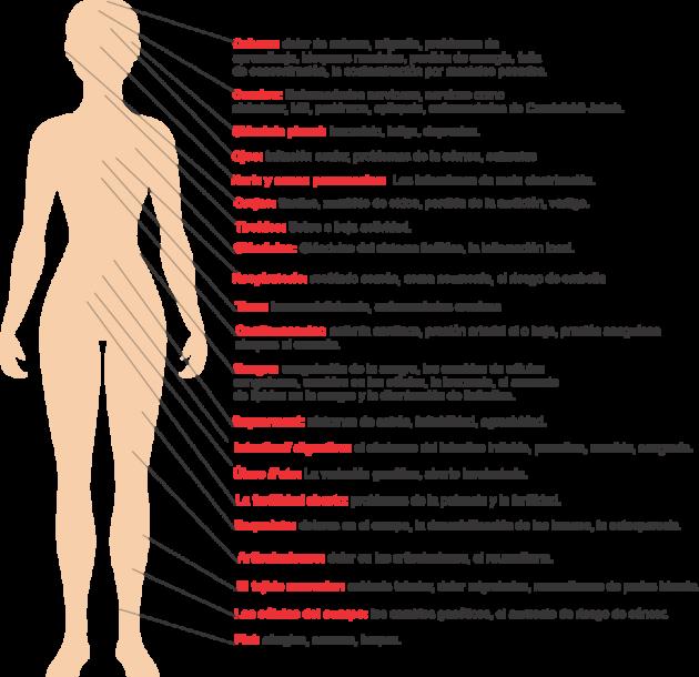 afectacion-de-las-radiacciones-en-el-cuerpo